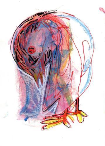 droeve-duif